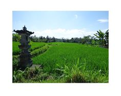 A view from Campuan Ridge walk, Ubud, Bali, Indonesia. Image tweeted by Jasmine Cook @JasmineCook0202