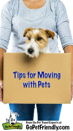 Not every pet friendly trip is a vacation - these tips will help get ready and move with your pets!