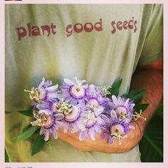 Plant good seeds