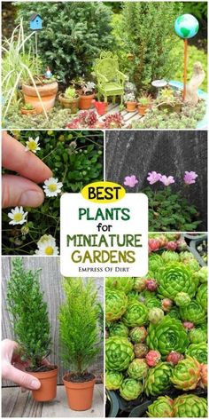 Want to create a miniature garden with living plants? This guide by expert Janit Calvo has all the information and resources you need to get started. | Empress of Dirt