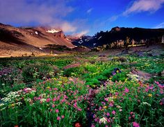 Google image of Wildflowers from OREGON.