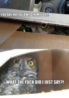 Creepy owls lol.