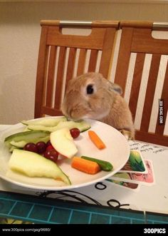 So he decided to eat with us at the table... - 300Pics
