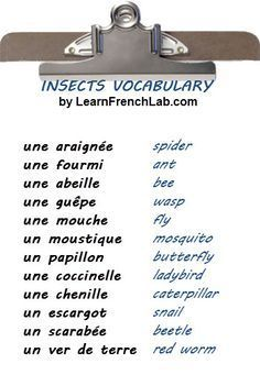Free Audio Lesson: Learn vocabulary for the Kitchen in French French Language Lessons, French Lessons, English Lessons, Learn English, French Expressions, French Phrases, French Words, French Slang, French Grammar