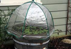 Umbrella Greenhous