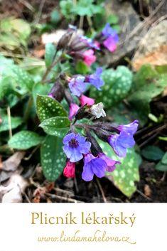 Herbs, Plants, Flowers