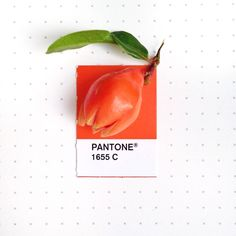 Pantone 1655 color match. Fall has brought in beautiful colors. Pomegranate flower bud. http://obus.com.au/
