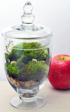Sheep Terrarium // Live Moss // Apothecary Jar // Green Gift // Home Decor