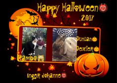 😈👹🎃 WISH YOU ALL A HAPPY SAFE HALLOWEEN MY FRIENDS ‼️‼️🎃 IJ3 (Halloween greetings from sweet Inger& her boys Dexter , Duncan 🐰& Rambo 🐱 in Norway )
