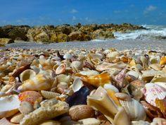 seashells at Blind Pass on Captiva southwest Florida