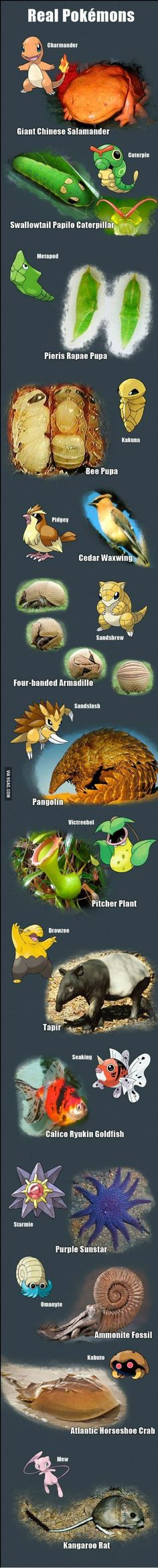 Real Life Pokemons