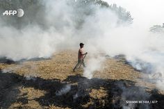 An Indian farm labourer burns paddy stubble in a field on the outskirts of Jalandhar in Punjab state on November 4, 2016. New Delhi and surrounding areas have been covered in smog in recent days, blamed on farmers in neighbouring states burning...