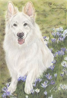 Coloured pencil drawing of Rocco the White German Shepherd. https://sheldenefineart.com/