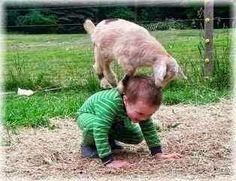 Trendy funny animals for kids happy Ideas Funny Babies, Funny Kids, Funny Cute, Cute Kids, Cute Babies, Animals For Kids, Cute Baby Animals, Animals And Pets, Funny Animals