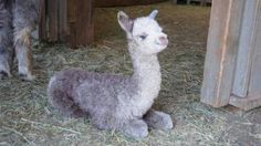 25 adorable baby farm animals | Living the Country Life