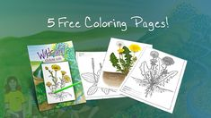 Get this free printable herbs coloring book, with color pictures of common plants that can be used for herbal first aid, and line drawings to color. Free Coloring Pages, Coloring For Kids, Coloring Books, Colouring, Crafts With Pictures, Colorful Pictures, Crazy Colour, Healing Herbs, Medicinal Plants