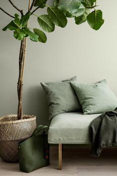 intérieur, déco   séjour, vert pâle, banquette, plante, 2018 Couleur Salon 90de521c6db