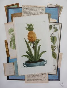 Pineapples – 18 C prints   Jean-Charles de Ravenel