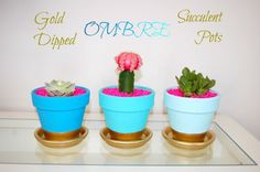 Gold Dipped Ombre Succulent Pots | eBay