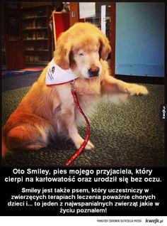 Tuliłabym zawsze <3  #Smiley #dog #aww