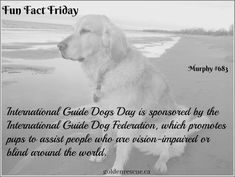 We may be a day late but we are sending the utmost respect to these amazing companions! The freedom they provide to those they serve is a remarkable gift. They deserve the recognition. #goldenretriever #FunFactFriday #secondchance Fun Fact Friday, Scotch Collie, King Spaniel, Raining Cats And Dogs, Shetland Sheepdog, Fun Facts, Sheltie, How To Find Out, Dog Cat