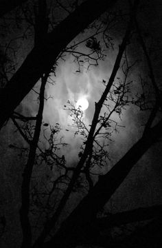 Black | 黒 | Kuro | Nero | Noir | Preto | Ebony | Sable | Onyx | Charcoal | Obsidian | Jet | Raven | Color | Texture | Pattern | Moonlight through the limbs