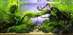 Planted Tank Old River by Sven Pohle - Aquascape Awards