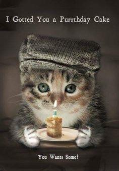 Cat Birthday Wishes Cat Birthday Memes, Happy Birthday Wishes Cards, Birthday Card Sayings, Happy Birthday Meme, Happy Birthday Sister, Funny Birthday Cards, Happy Birthday With Cats, Birthday Quotes, 50th Birthday Messages