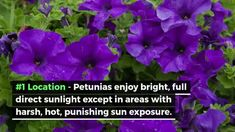 Make Stunning Mason Jar Solar Lights - Coffee Grounds Garden, Container Gardening, Gardening Tips, Petunia Care, Pachira Aquatica, Rope Lighting, Knockout Roses, Chlorophytum, Hibiscus Plant