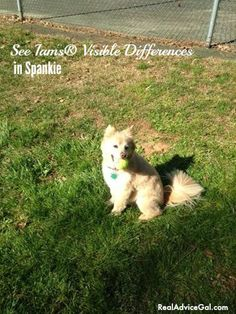Check out the Iams® High Quality Pet Food Visible Differences in my dog Spankie #IamsDifference  #ad