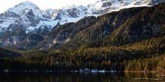La natura italiana, le foreste montane La foresta è una vasta zona non antropizzata dove la vegetazione naturale, costituita soprattutto da alberi ad alto fusto, cresce e si diffonde spontaneamente. Quando l'estensione della foresta è lim