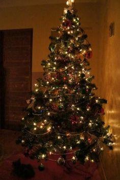 Christmas Tree by roxana.florea