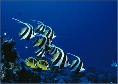 Concord FISH