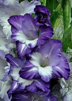 Garden Flowers - Annuals Or Perennials Very Pretty Exotic Flowers, My Flower, Purple Flowers, Beautiful Flowers, Gladiolus Flower, Belle Plante, Climbing Roses, Garden Plants, Perennials