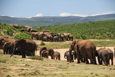 What animals you see on your African safari?   African Wildlife