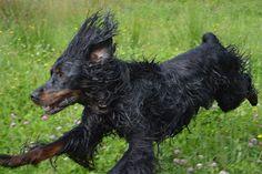Gårdstunet Hundepensjonat: Herlige hunder - herlig dag på tunet!