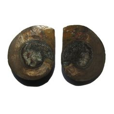 Matched Pair of Ammonite Halves. $19.90 USD Only 1 available