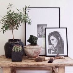 Pictures and plants