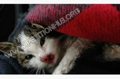 Justice for Pedro! Tossed From A Moving Car On Highway 427 in Toronto! | PetitionHub.org