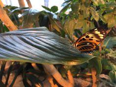 Milwaukee Public Museum butterfly garden