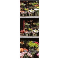 Trademark Art Parisian Flower Stand Canvas Art by Preston, Size: 8 x 24, Multicolor