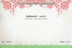 őszibarack [ˈøːsibɑrɑtsk] – peach [Literally::: autumn-apricot; autumn-peach]  ősz [ˈøːs] – autumn őszi [ˈøːsi] – of autumn; autumn- barack [bɑrɑtsk] – apricot; peach kajszibarack [ˈkɑjsibɑrɑtsk] – apricot sárgabarack [ˈʃaːrɡɑbɑrɑtsk] – apricot [Literally::: yellow-apricot]