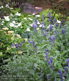 Victoria Blue Salvia, Lemon Cream Lantana and White Vinca