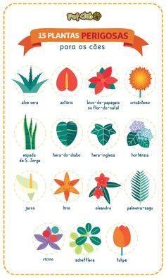 Pin on Horta Eco Garden, Love Garden, Garden Ideas, Pet Dogs, Pets, Dog Hacks, Green Life, Pet Health, Pet Shop