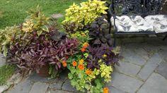 Daryl's garden in New Jersey, revisited | Fine Gardening