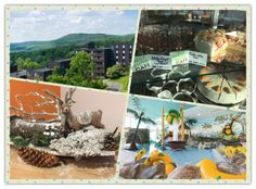 Rhön Park Hotel: Reisetipp für Familien