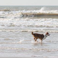 Dog and the Sea Dog Beach, Beach Walk, Beach Bum, Driftwood Beach, Beach Bungalows, I Love The Beach, Salt And Water, Animal Party, Beach Cottages