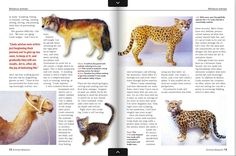 Artist Linda Fisher featured in American Miniaturist Magazine by Deb Weissler: www.americanminiaturist.com issue #156 - #Dollhouse #tinyanimals #miniatures #sculpting #tinythings #cute #miniaturecollector