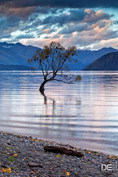 """Lake Wanaka Tree"" - photo by DarkElf Photography, via 500px; in New Zealand"