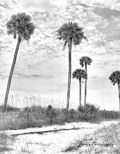 Palms in black/white